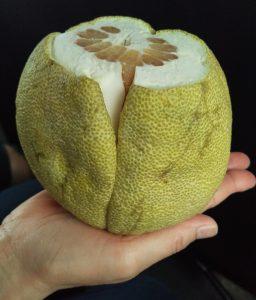 グレープフルーツより大きい「ゆず」ジューシーでおいしかった