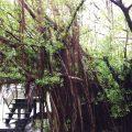 台南で宿泊!台南おすすめスポット観光のモデルコース (2日目)